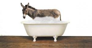 Donkey-in-bathtub