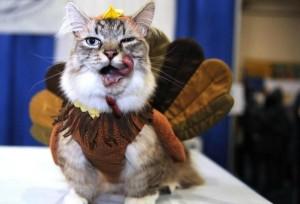 turkey-cat-5