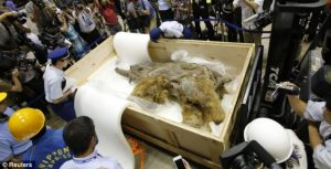 39,000 year old mammoth found frozen in ice in Siberia